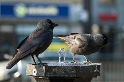 bird bidet